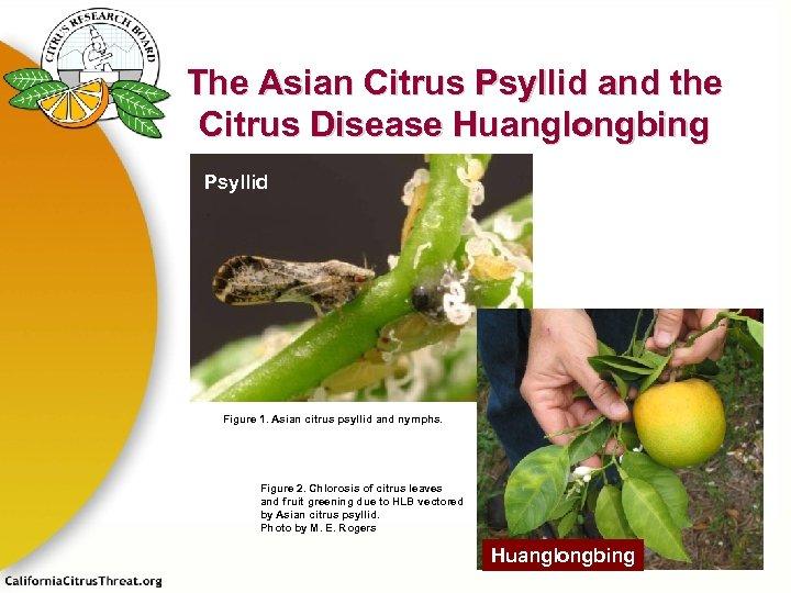 The Asian Citrus Psyllid and the Citrus Disease Huanglongbing Psyllid Figure 1. Asian citrus