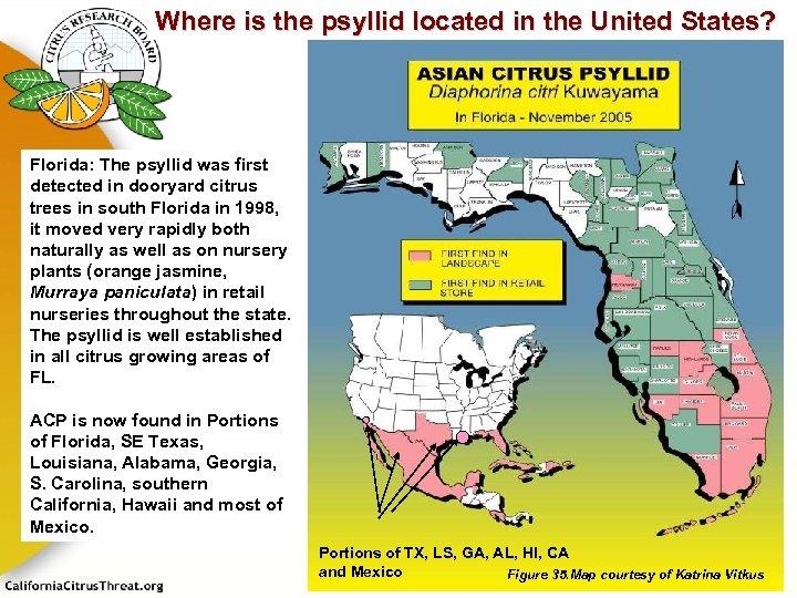 Where is the psyllid located in the United States? Florida: The psyllid was first