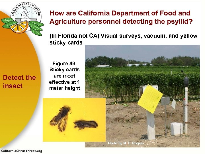 How are California Department of Food and Agriculture personnel detecting the psyllid? (In Florida