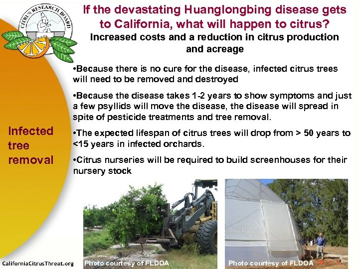 If the devastating Huanglongbing disease gets to California, what will happen to citrus? Increased