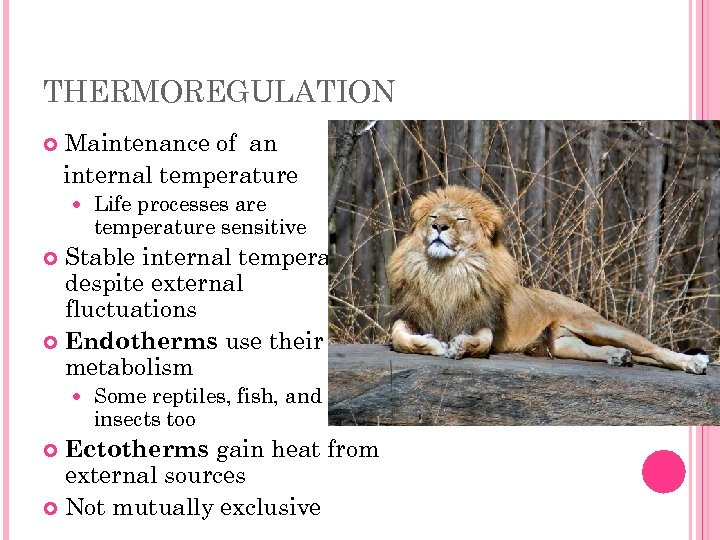 THERMOREGULATION Maintenance of an internal temperature Life processes are temperature sensitive Stable internal temperature
