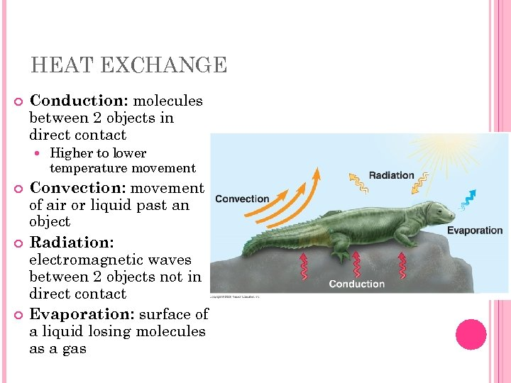 HEAT EXCHANGE Conduction: molecules between 2 objects in direct contact Higher to lower temperature
