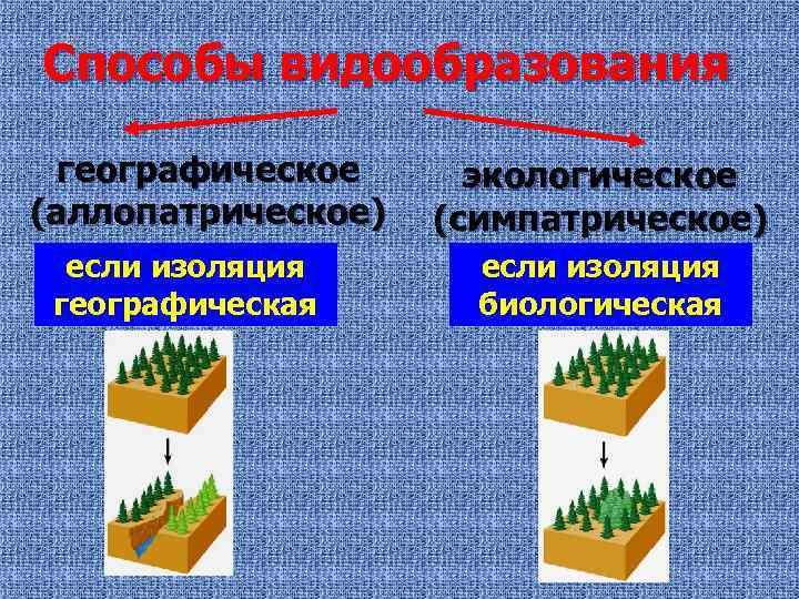Способы видообразования географическое (аллопатрическое) если изоляция географическая экологическое (симпатрическое) если изоляция биологическая
