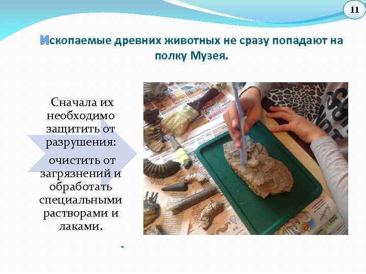 11 И скопаемые древних животных не сразу попадают на полку Музея. Сначала их необходимо