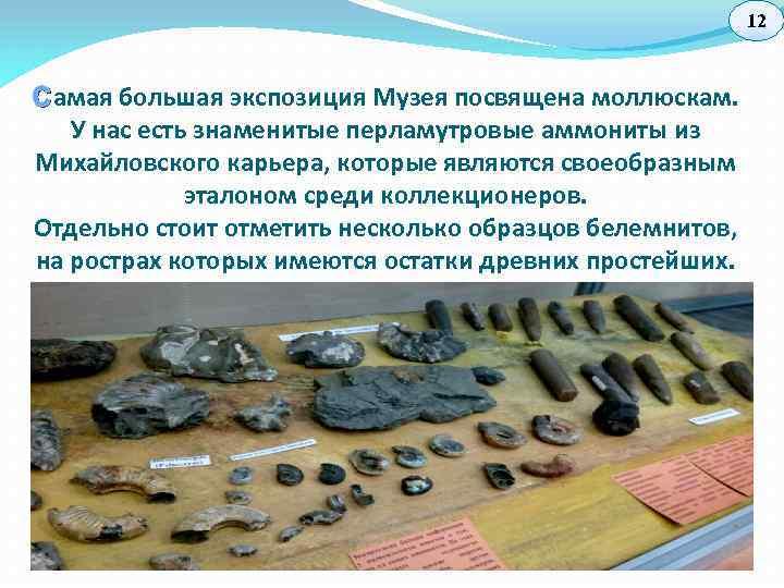 12 С амая большая экспозиция Музея посвящена моллюскам. У нас есть знаменитые перламутровые аммониты