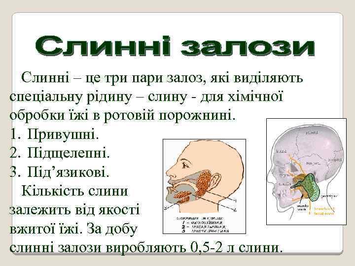 Слинні – це три пари залоз, які виділяють спеціальну рідину – слину - для