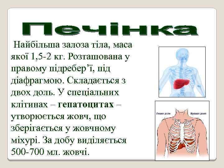 Найбільша залоза тіла, маса якої 1, 5 -2 кг. Розташована у правому підребер'ї, під