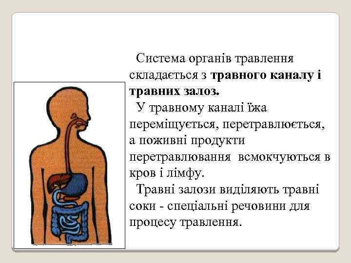 Система органів травлення складається з травного каналу і травних залоз. У травному каналі їжа