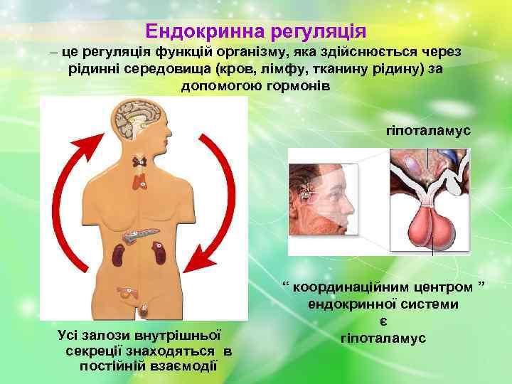 Ендокринна регуляція – це регуляція функцій організму, яка здійснюється через рідинні середовища (кров, лімфу,