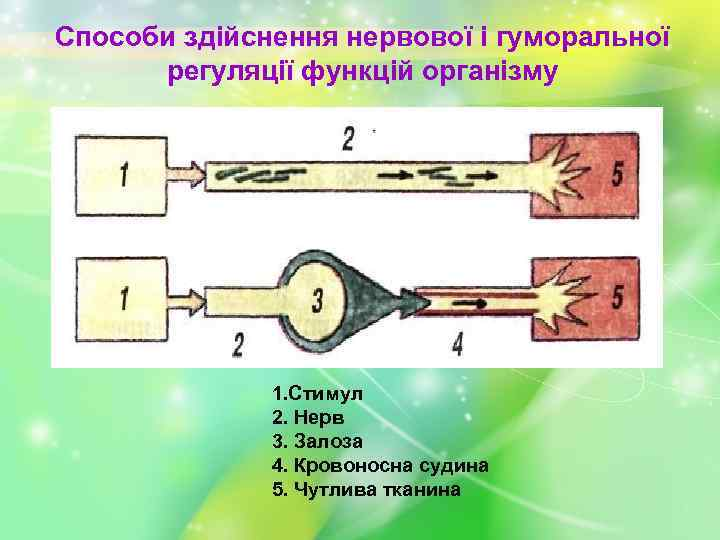 Способи здійснення нервової і гуморальної регуляції функцій організму 1. Стимул 2. Нерв 3. Залоза