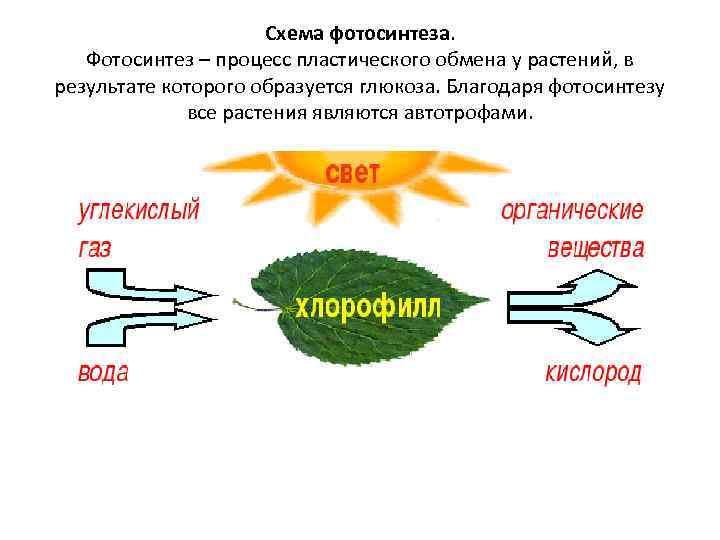 Фотосинтез и энергообмен растений