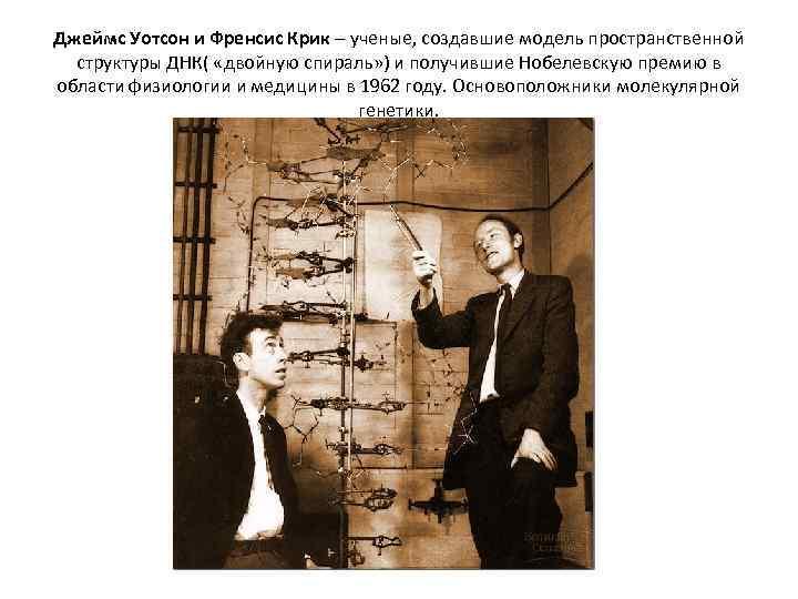 Джеймс Уотсон и Френсис Крик – ученые, создавшие модель пространственной структуры ДНК( «двойную спираль»