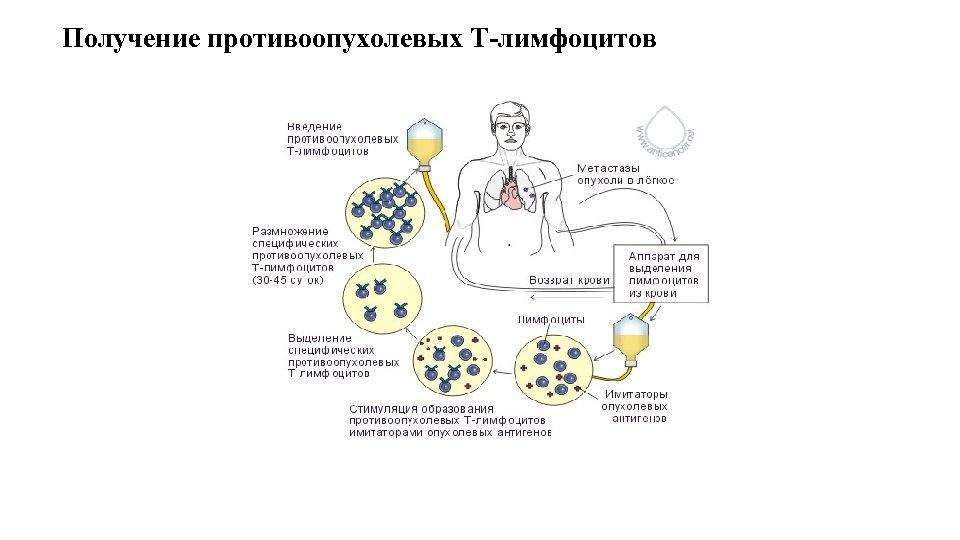 Получение противоопухолевых Т-лимфоцитов