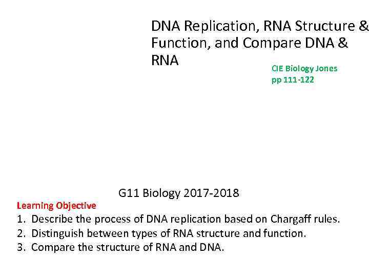 compare the structure and functions of dna and rna
