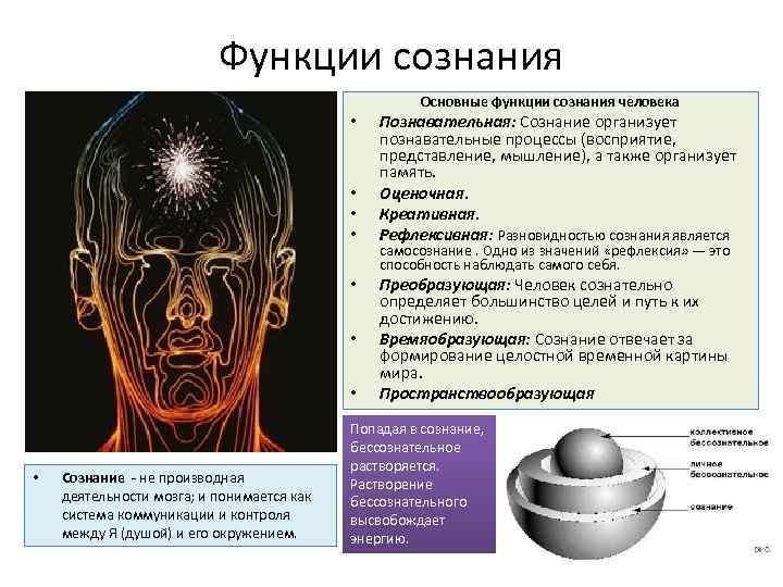 Функции сознания Основные функции сознания человека • • Сознание - не производная деятельности мозга;