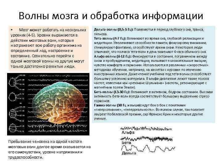 Волны мозга и обработка информации • Мозг может работать на нескольких уровнях (4 -5).