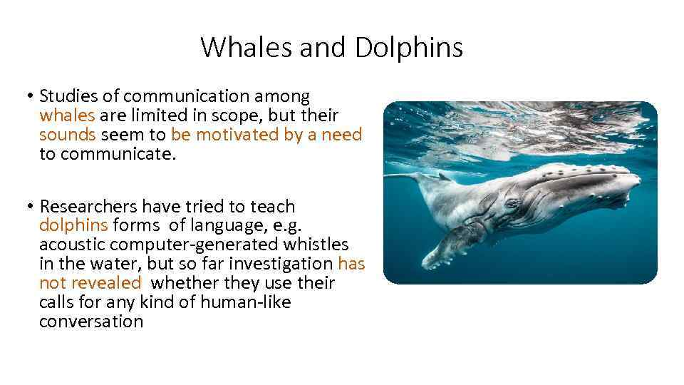 a comparison of the communication mechanisms of dolphins and humans Do you want to learn more and practice with the content would you like to see this video with subtitles you'll find this online university course for free at courseraorg contact: mooc@cdh.