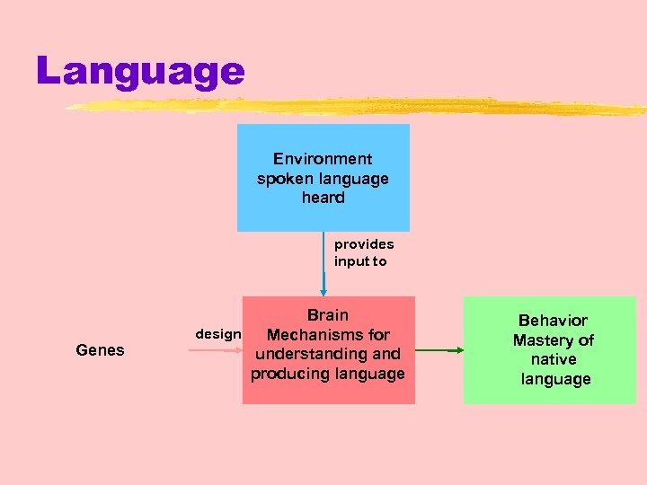 Language Environment spoken language heard provides input to Genes Brain design Mechanisms for understanding