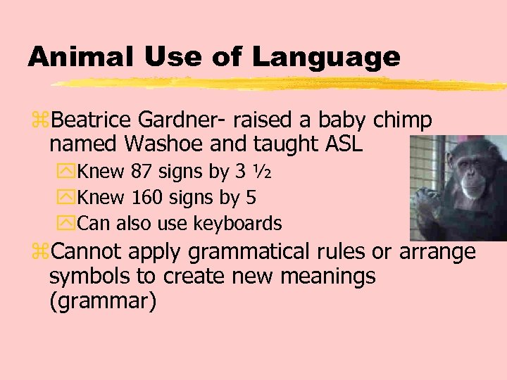 Animal Use of Language z. Beatrice Gardner- raised a baby chimp named Washoe and