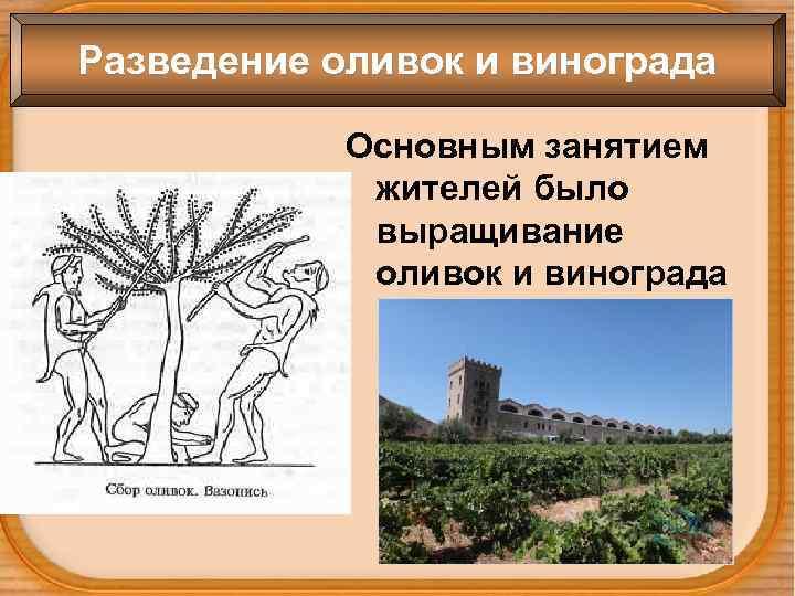 Разведение оливок и винограда Основным занятием жителей было выращивание оливок и винограда