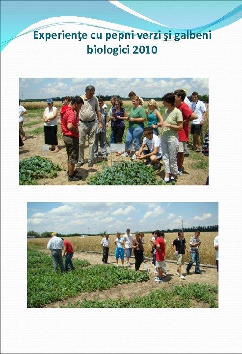 Experienţe cu pepni verzi şi galbeni biologici 2010