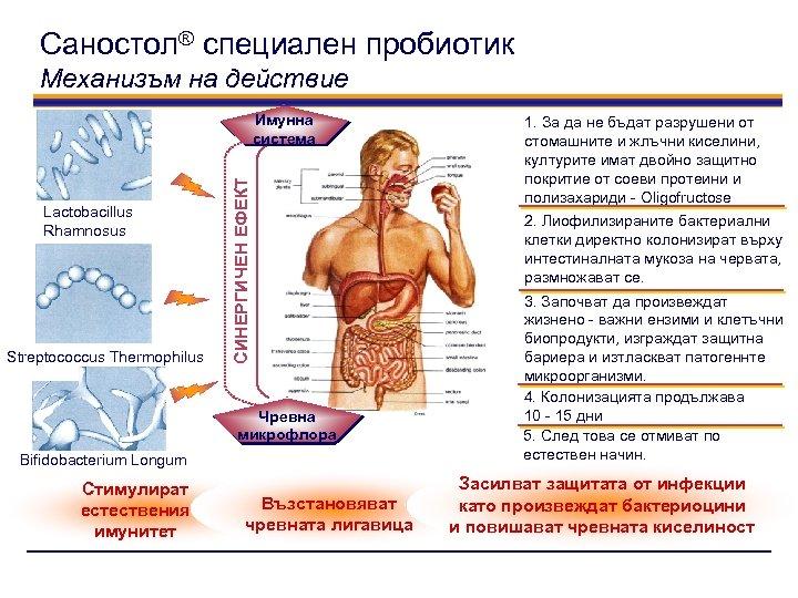Саностол® специален пробиотик Механизъм на действие Lactobacillus Rhamnosus Streptococcus Thermophilus СИНЕРГИЧЕН ЕФЕКТ Имунна система