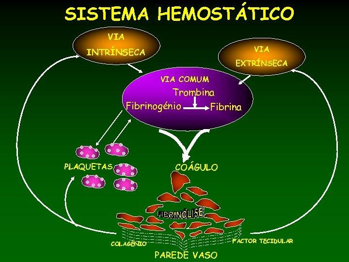 SISTEMA HEMOSTÁTICO VIA INTRÍNSECA EXTRÍNSECA VIA COMUM Trombina Fibrinogénio Fibrina PLAQUETAS COÁGULO FACTOR TECIDULAR