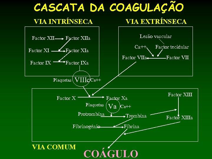 CASCATA DA COAGULAÇÃO VIA INTRÍNSECA Factor XII Factor XI Factor IX VIA EXTRÍNSECA Lesão