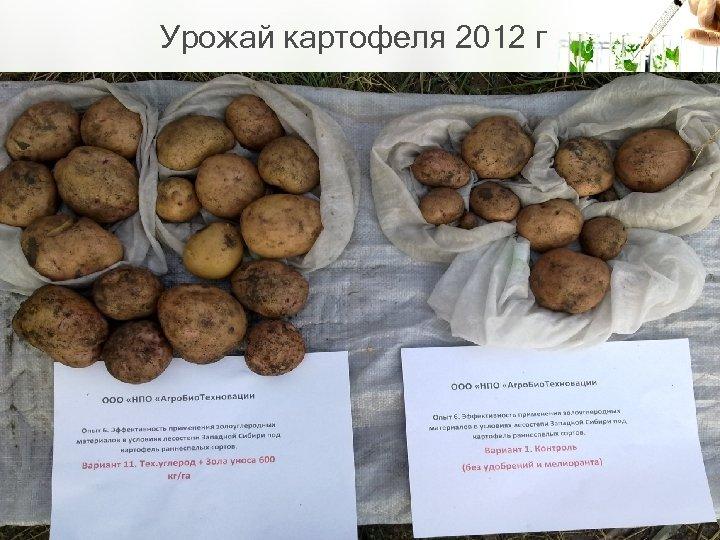 Урожай картофеля 2012 г