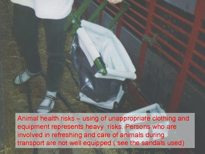Animal health risks – using of unappropriate clothing and equipment represents heavy risks. Persons