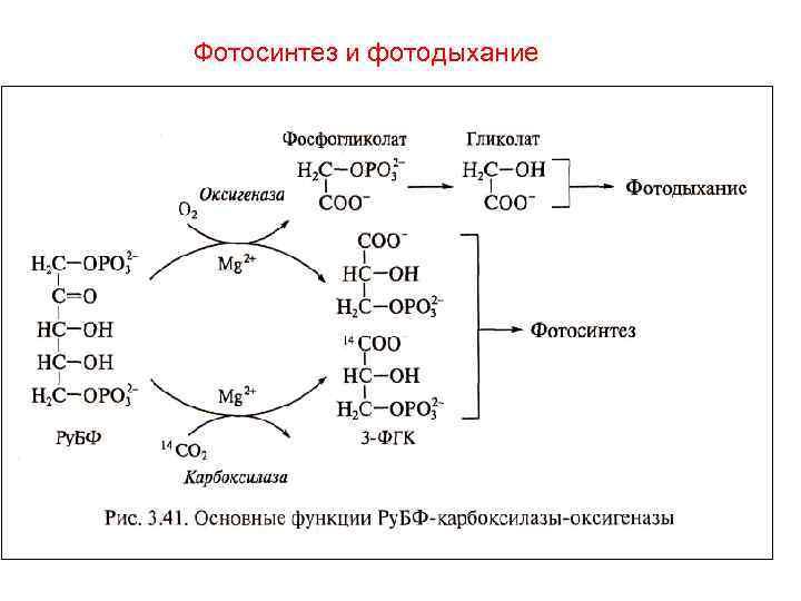Появление фотосинтеза привело
