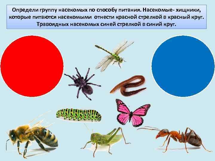 Питание насекомых картинки для детей