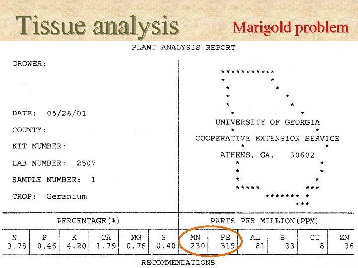 Tissue analysis Marigold problem