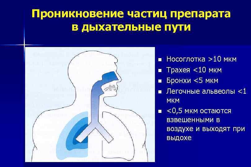 Проникновение частиц препарата в дыхательные пути n n n Носоглотка >10 мкм Трахея <10