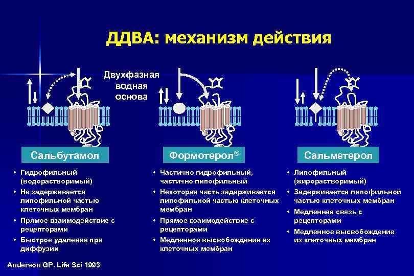 ДДВА: механизм действия Двухфазная водная основа Сальбутамол Формотерол® Сальметерол • Гидрофильный (водорастворимый) • Частично