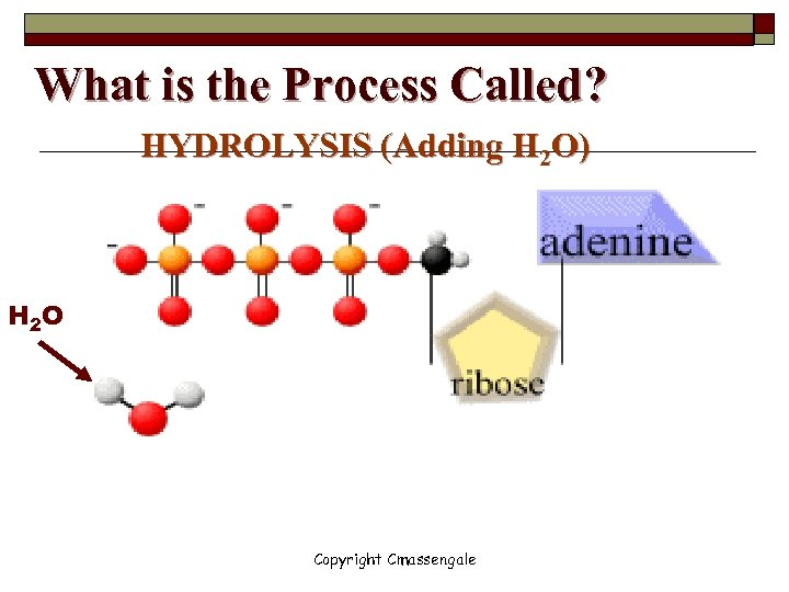 What is the Process Called? HYDROLYSIS (Adding H 2 O) H 2 O Copyright