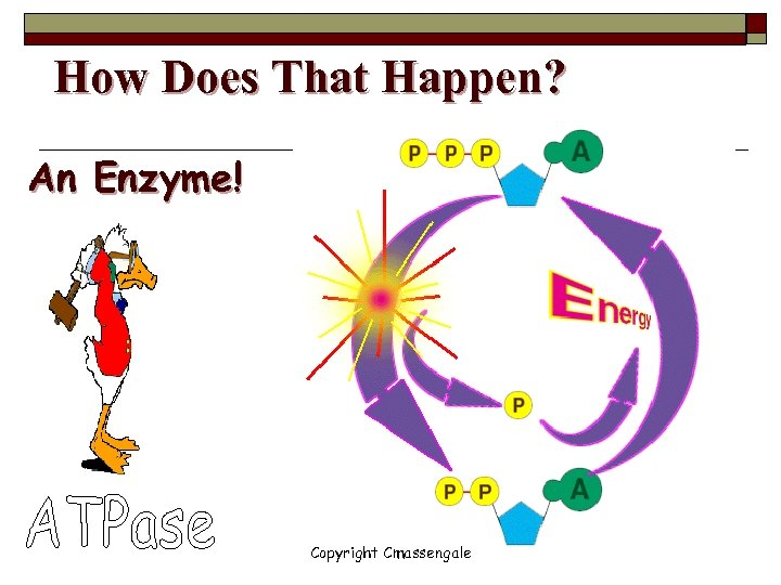 How Does That Happen? An Enzyme! Copyright Cmassengale