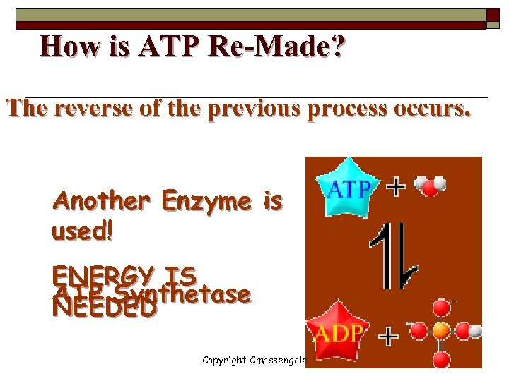 How is ATP Re-Made? The reverse of the previous process occurs. Another Enzyme is