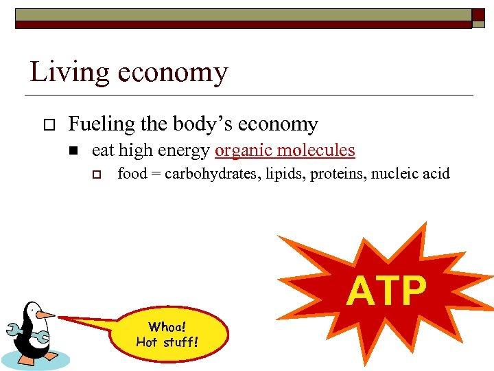 Living economy o Fueling the body's economy n eat high energy organic molecules o