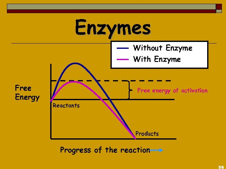 Enzymes Without Enzyme With Enzyme Free Energy Free energy of activation Reactants Products Progress