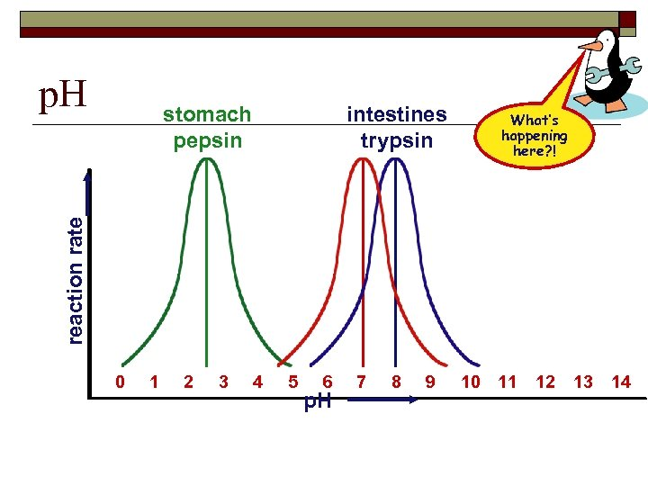 p. H intestines trypsin What's happening here? ! reaction rate stomach pepsin 0 1