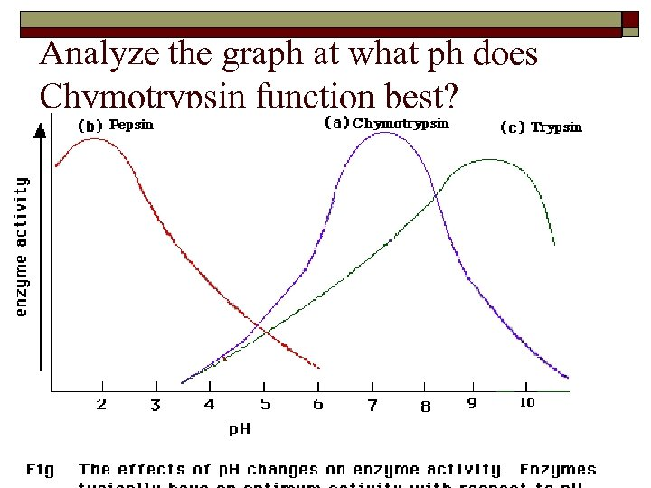 Analyze the graph at what ph does Chymotrypsin function best?
