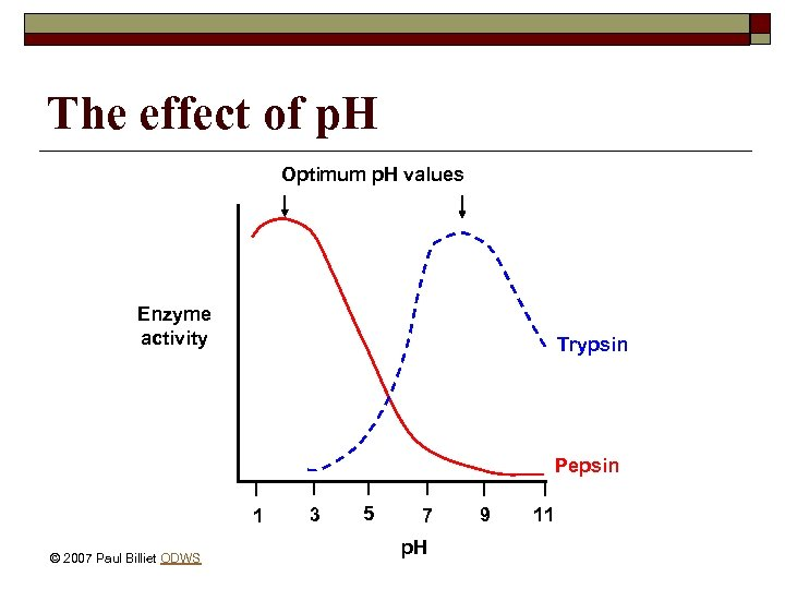 The effect of p. H Optimum p. H values Enzyme activity Trypsin Pepsin 1