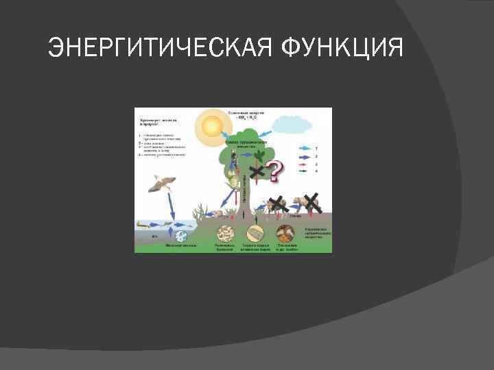 ЭНЕРГИТИЧЕСКАЯ ФУНКЦИЯ
