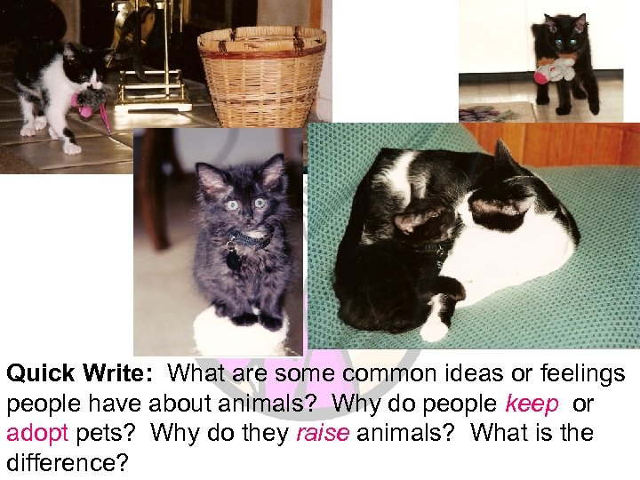 Quick Write: What are some common ideas or feelings people have about animals? Why