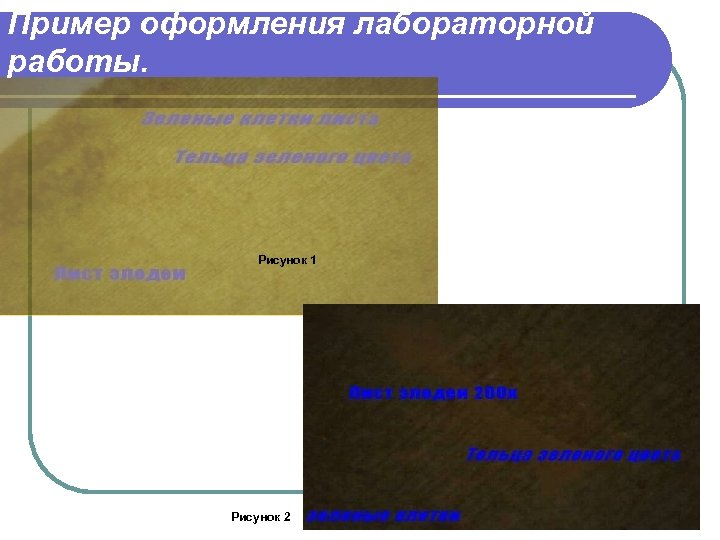 Пример оформления лабораторной работы. Рисунок 1 Рисунок 2