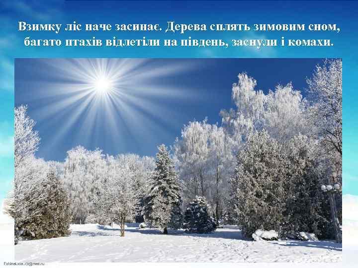 Взимку ліс наче засинає. Дерева сплять зимовим сном, багато птахів відлетіли на південь, заснули