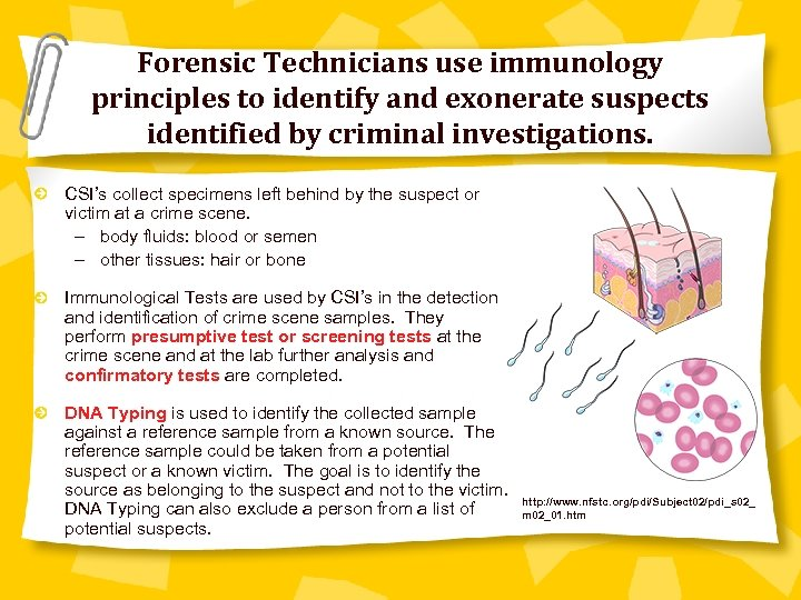 Forensic Technicians use immunology principles to identify and exonerate suspects identified by criminal investigations.