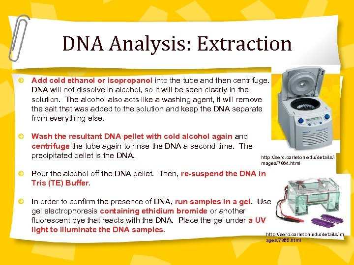 DNA Analysis: Extraction Add cold ethanol or isopropanol into the tube and then centrifuge.
