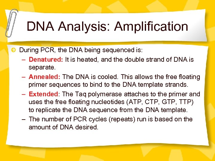 DNA Analysis: Amplification During PCR, the DNA being sequenced is: – Denatured: It is